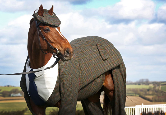 horse in a 3 piece suit