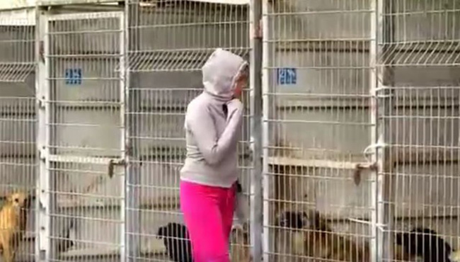 woman buys entire shelter