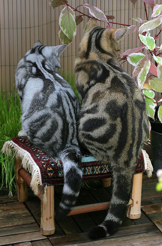 gorgeous coloring cats