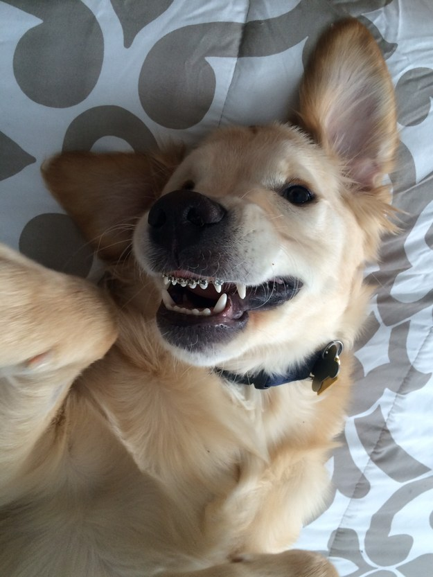 puppy with braces