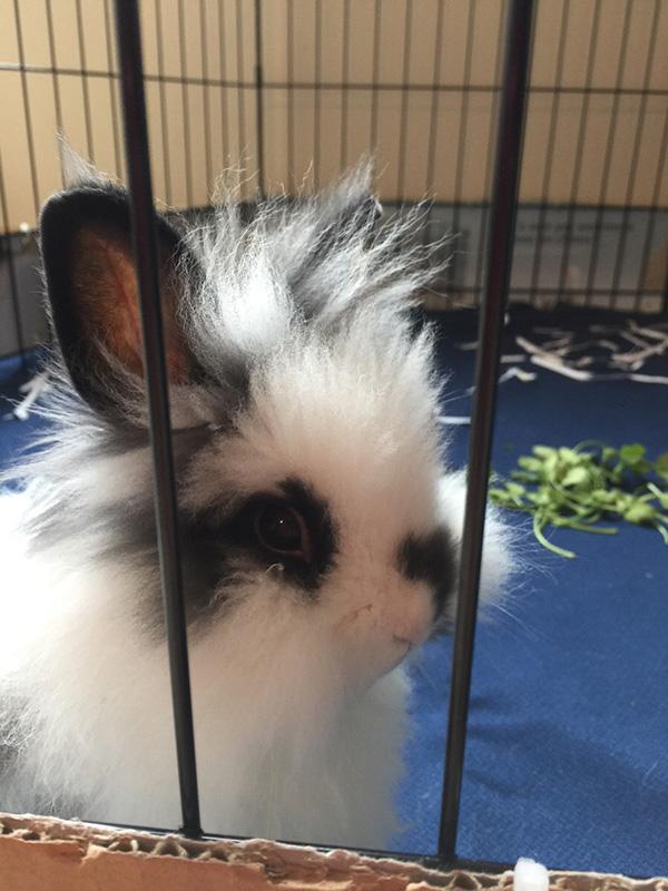 bunny bed head