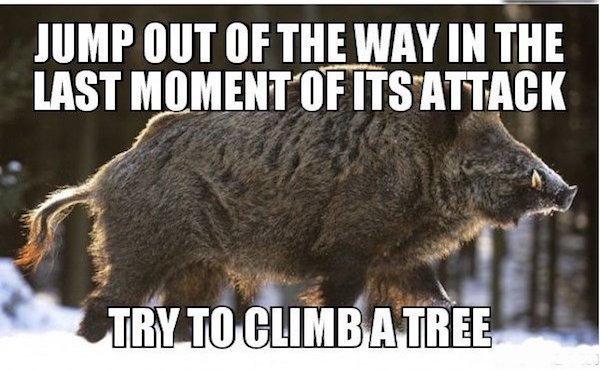 wild animal safety tips