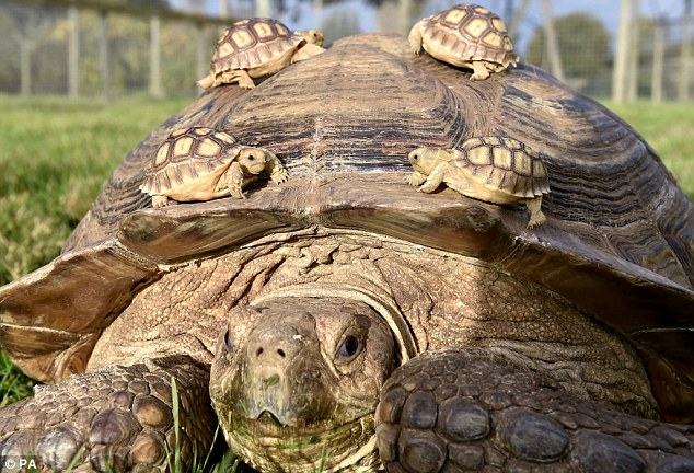 mom and turtle kids