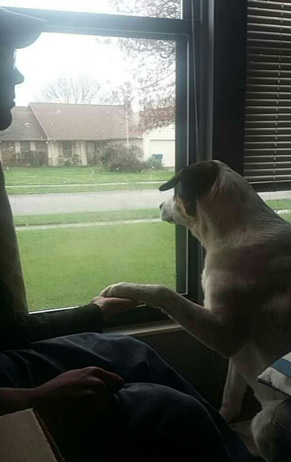 service dog anxiety