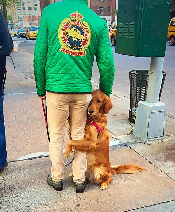 crossing street wit human cute dog