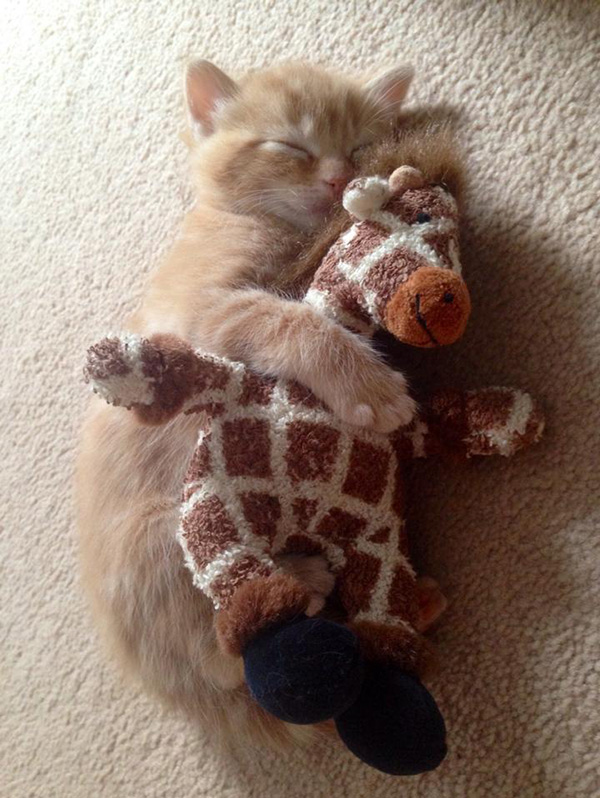 snuggle buddies cat and stuffed toy