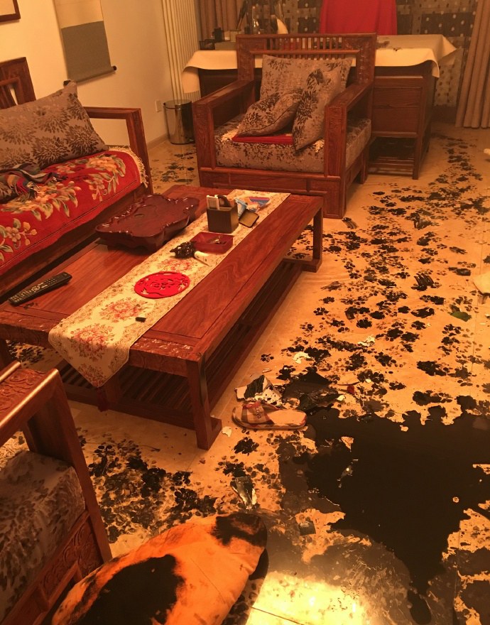 hosky makes huge mess in house