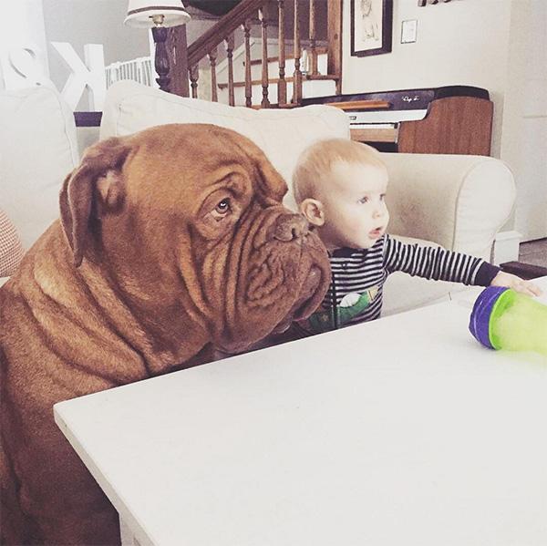 mastiff and baby best friends