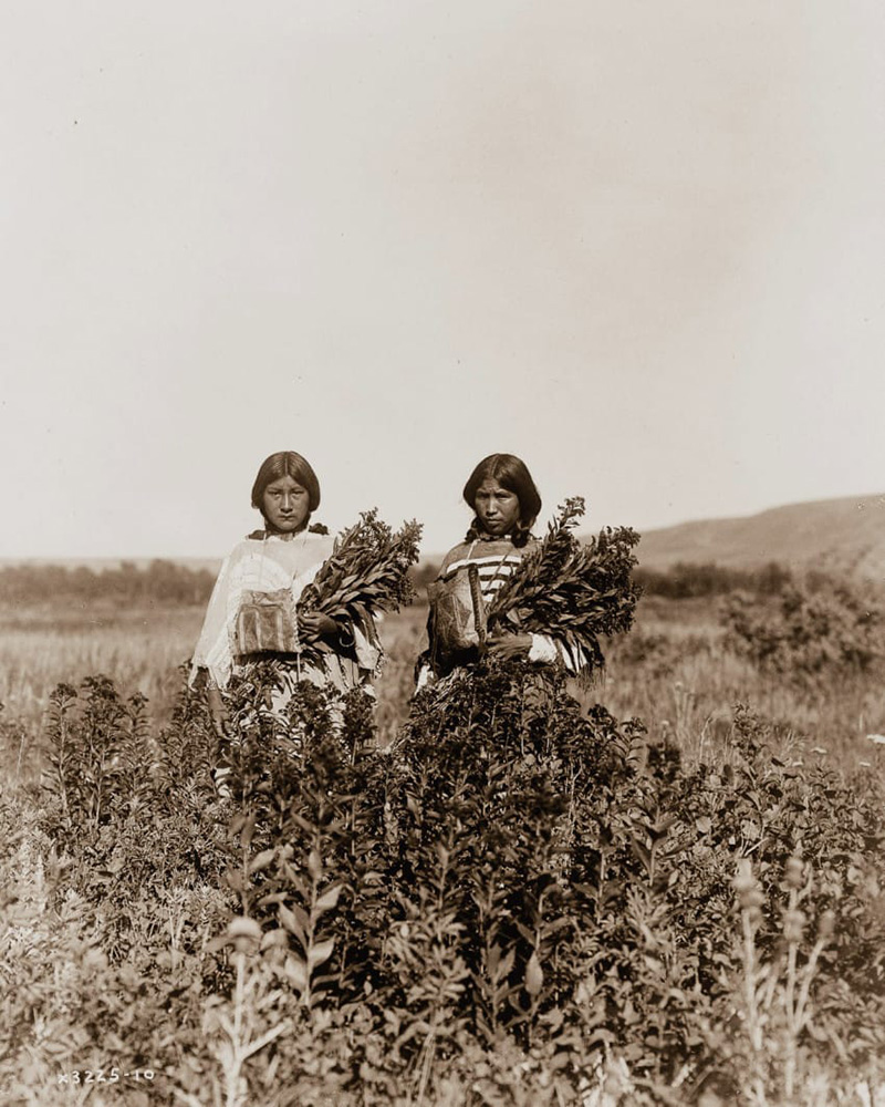 native american indian photos early 1900s