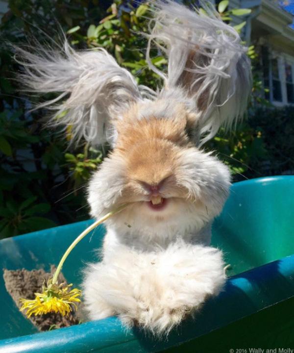 wally bunny