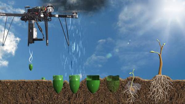 drones plant trees