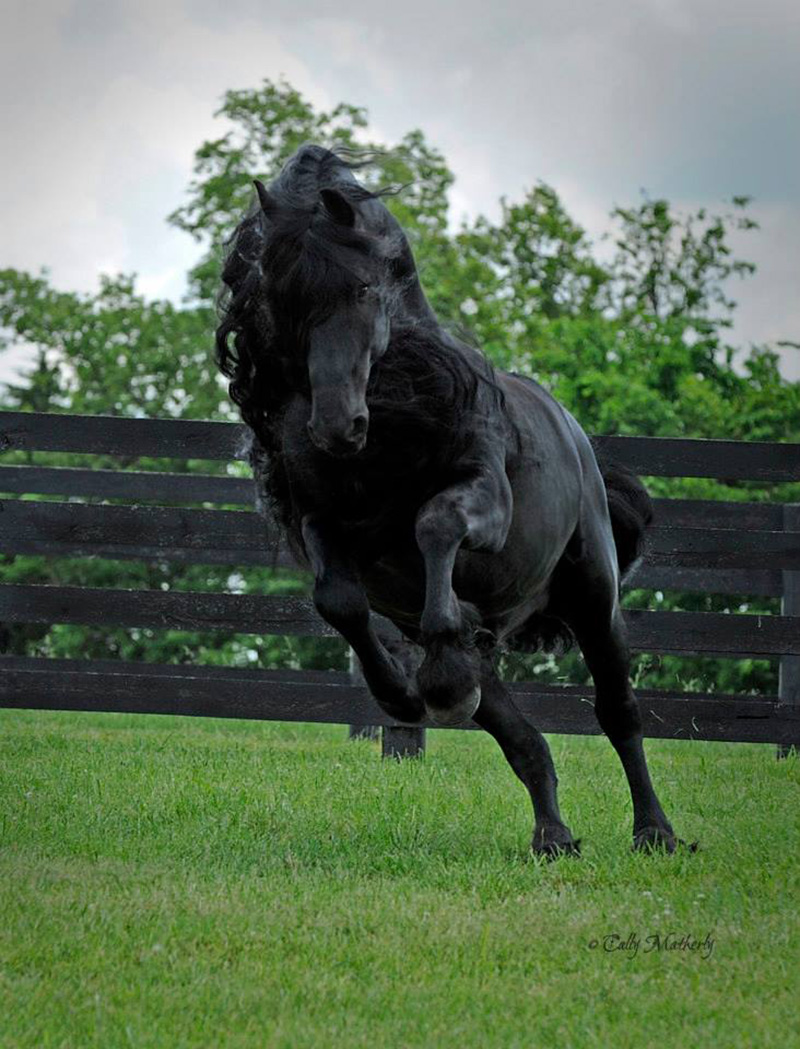 Frederick the great horse