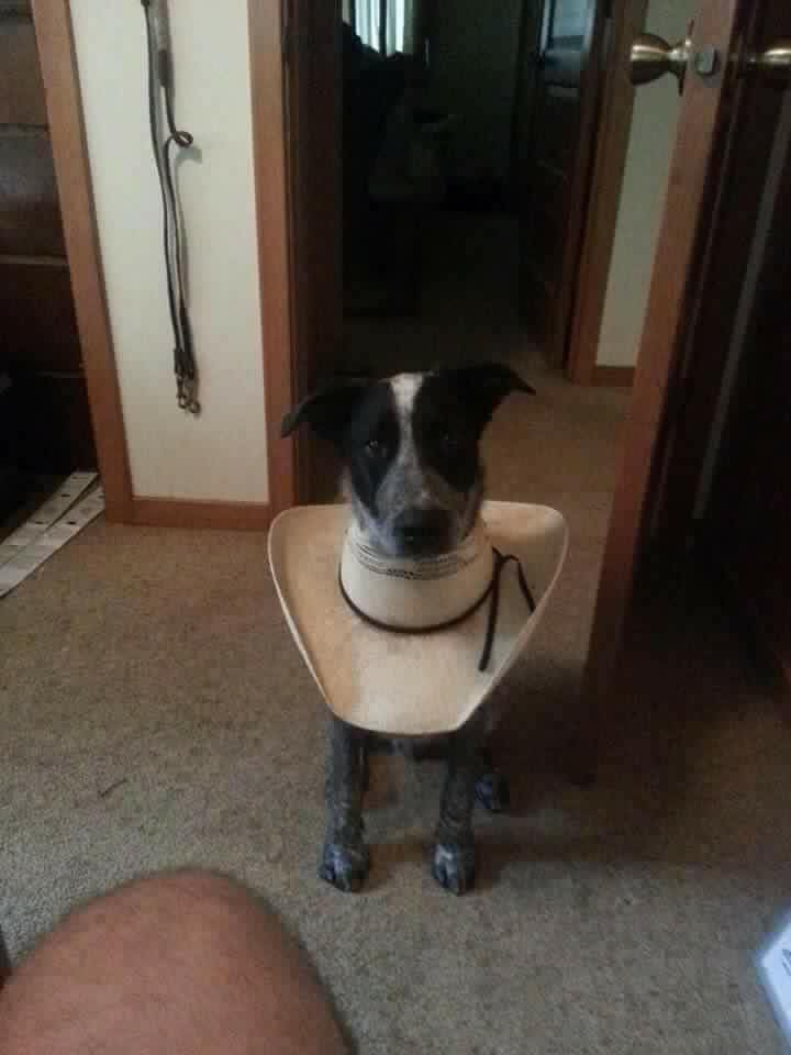 dog in cone hat