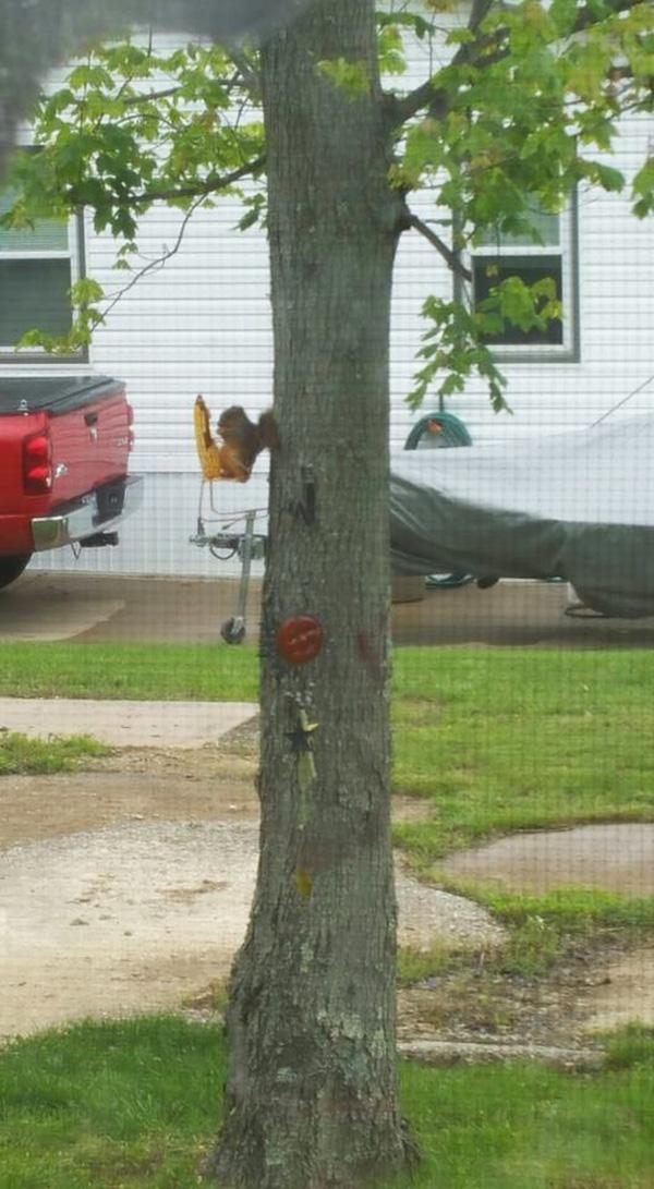 best squirrel feeder ever