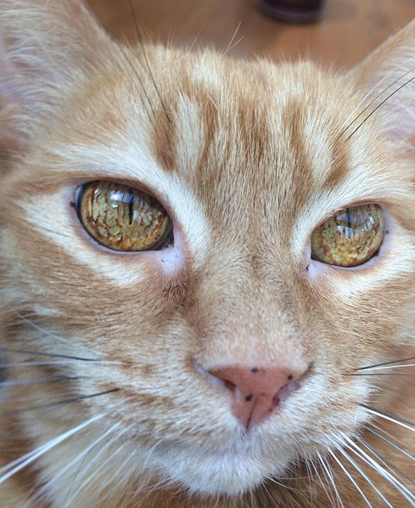cat eyes sauron