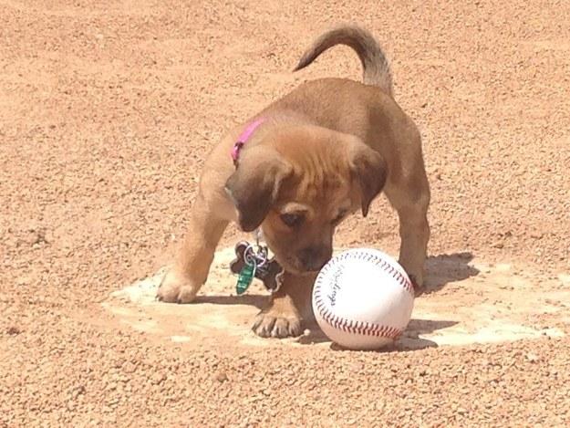 bat dog baseball team