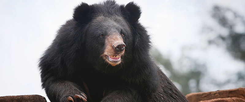 epic story about fighting black bear