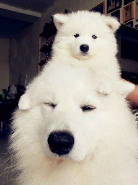 dog and mini me