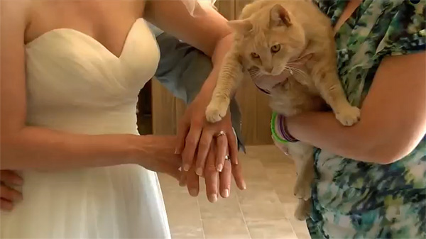 couple invites 100 cats to wedding