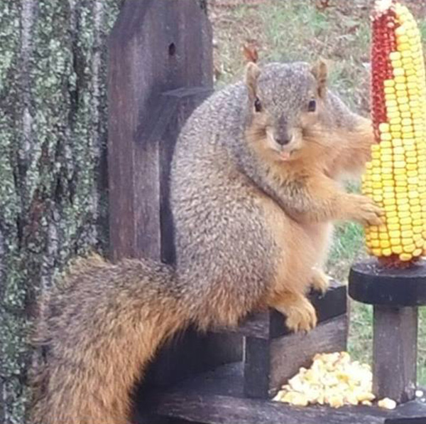 squirrel feeder that is a chair and corn holder