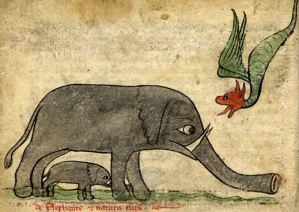 elephant drawings middle ages