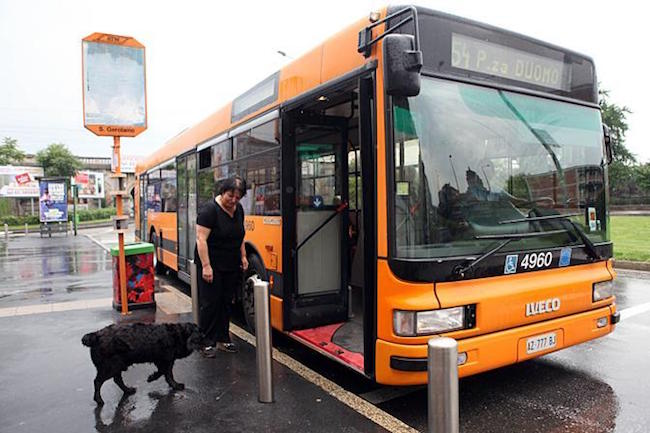 dog in Milan takes bus alone to park