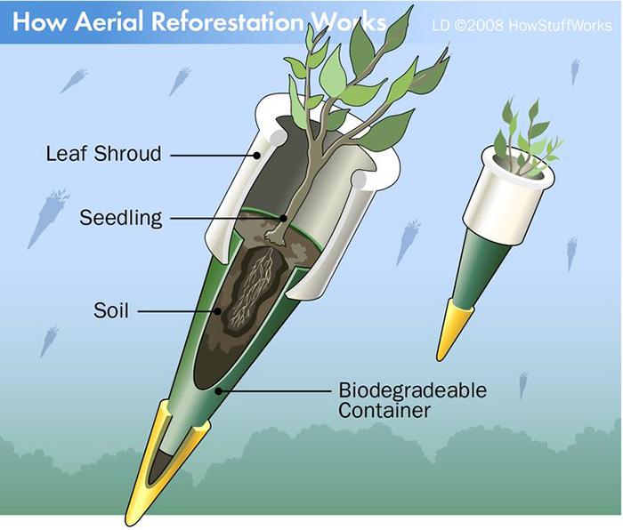 tree bombs reforestation