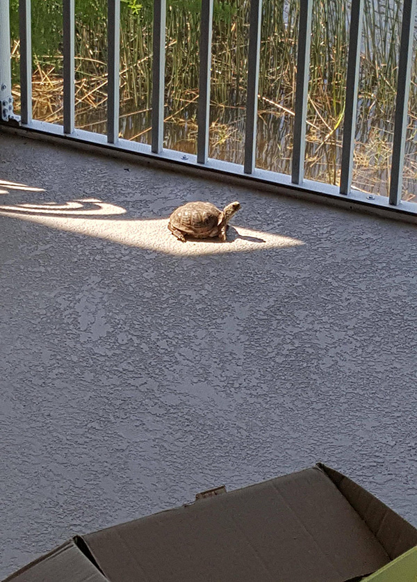 turtle in sunlight