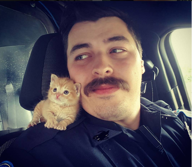 good news 2016 cop kitten