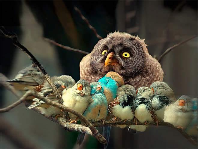 owl with baby birds
