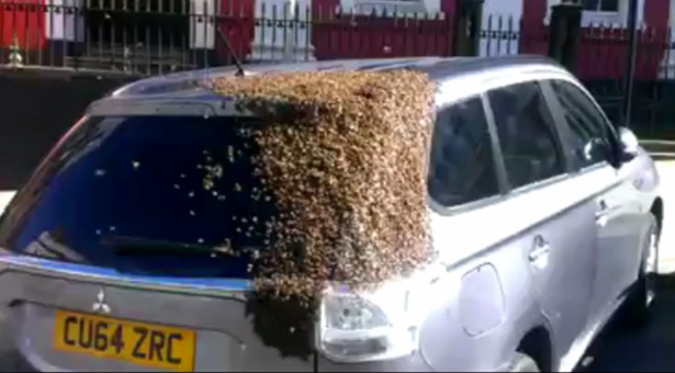 bees swarm and refuse to leave car