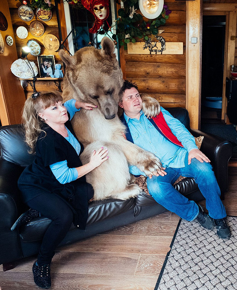 couple adopts bear tea party