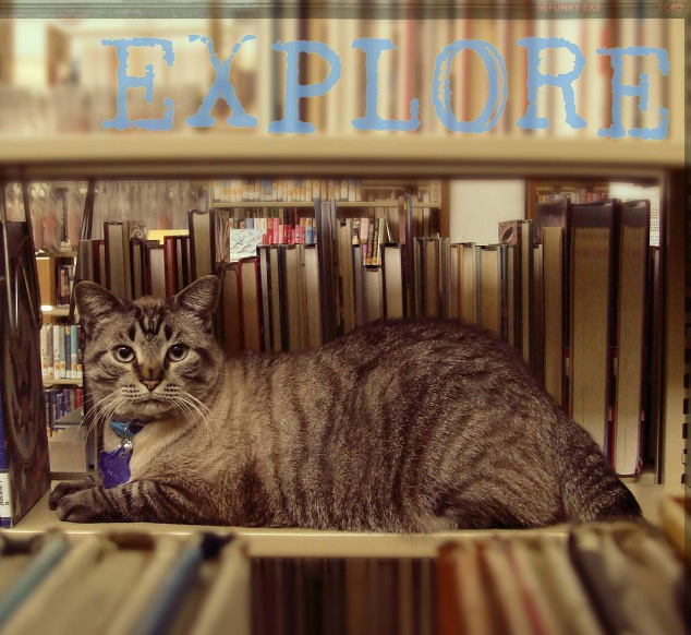 cat fired from library