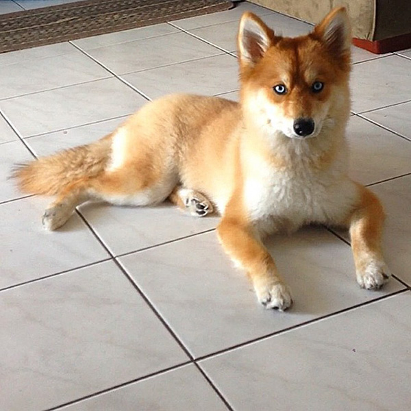 Looks Like A Cross Between A Fox And A Dog