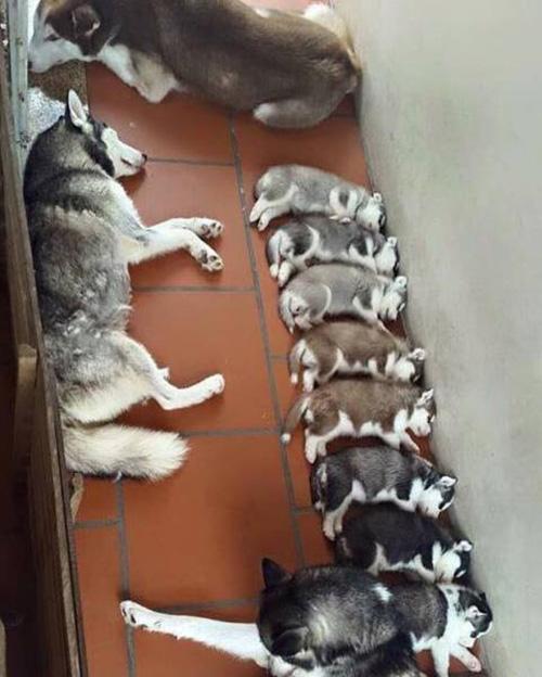 11 shades of grey