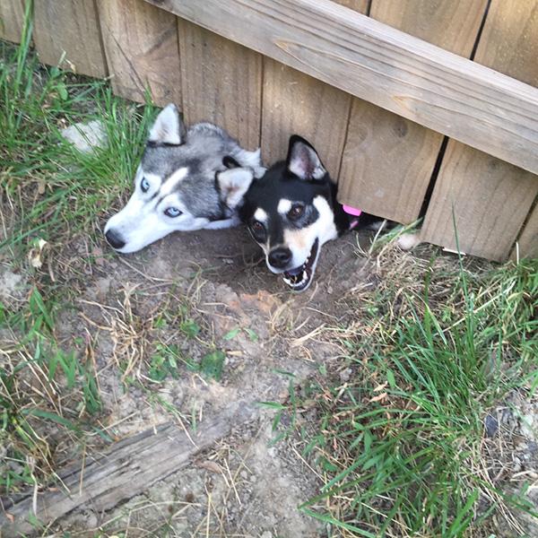 dogs under fence new neighbors