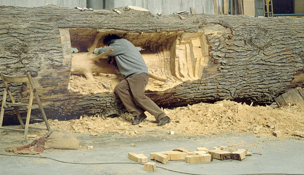 carving tree rings out leaving sapling