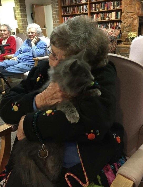 senior cats visit senior citizzens
