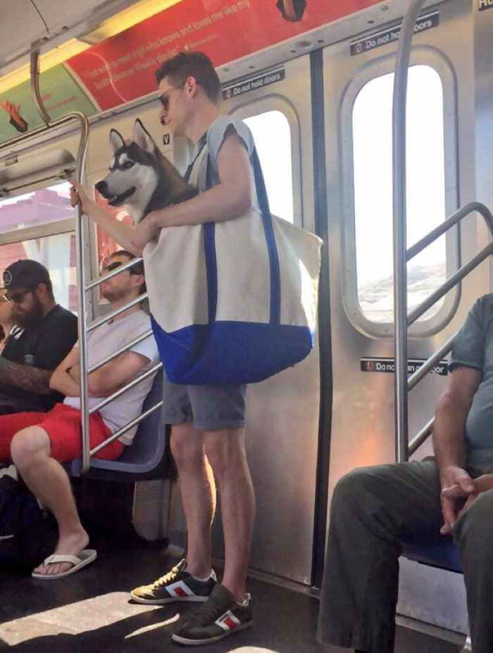 dog carrier subway NYC