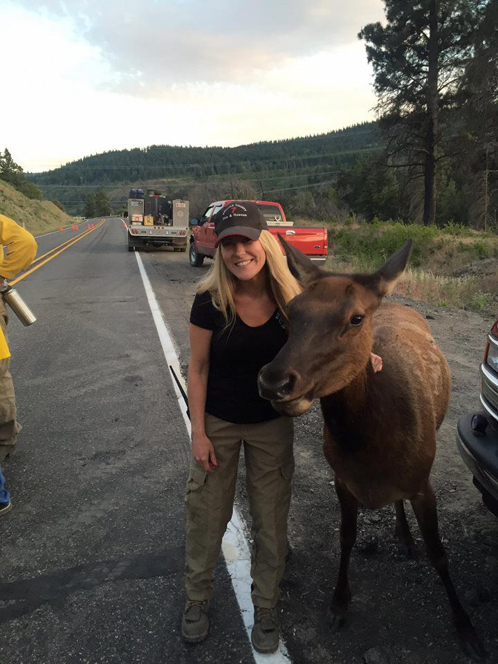 orphaned elk visits firefighters