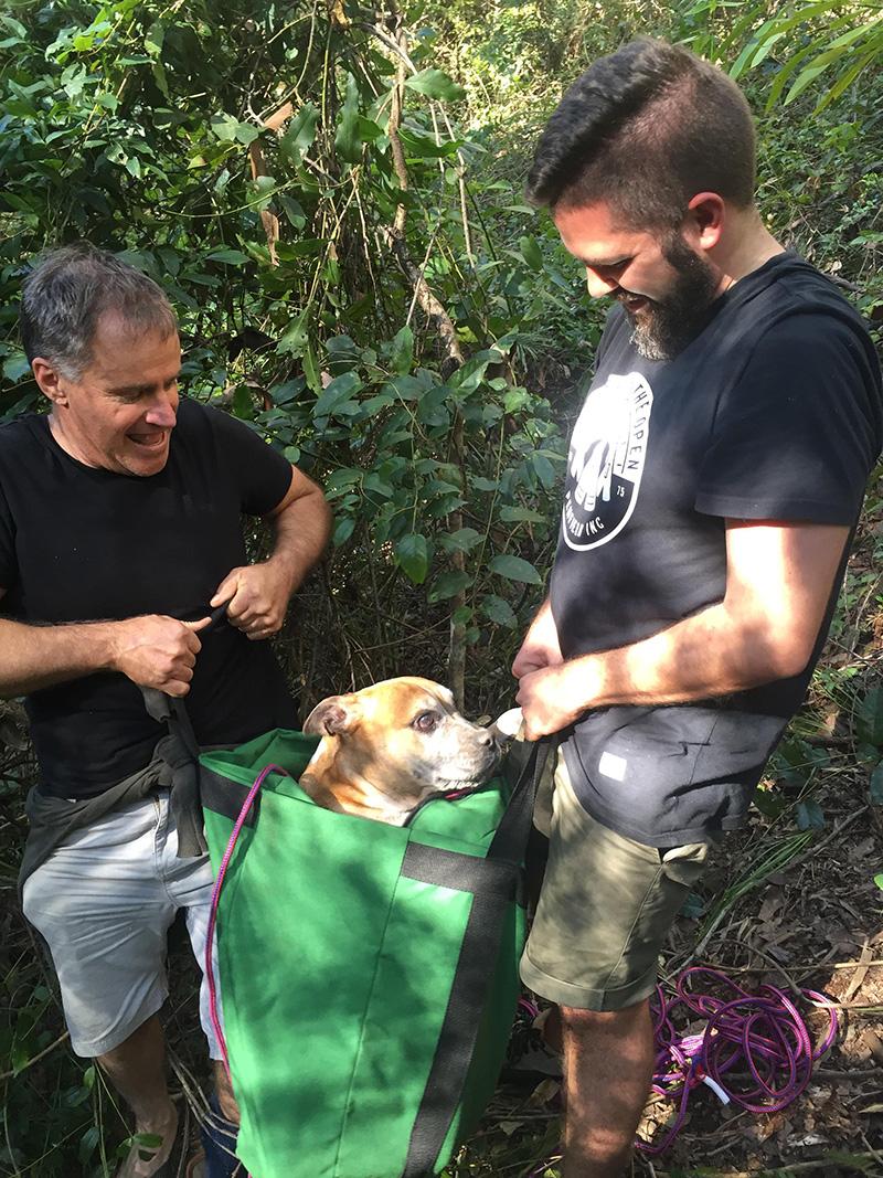 Australian dog rescue