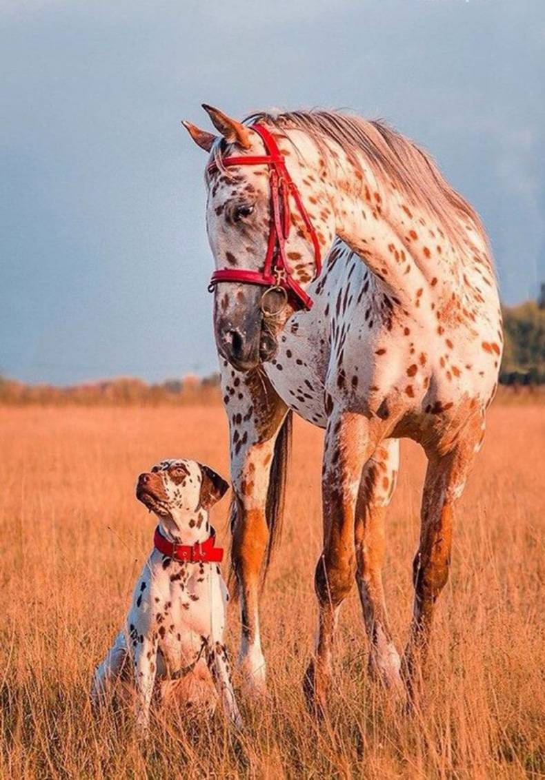 horse and dog son