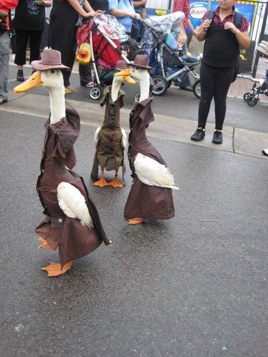 ducks in costumes