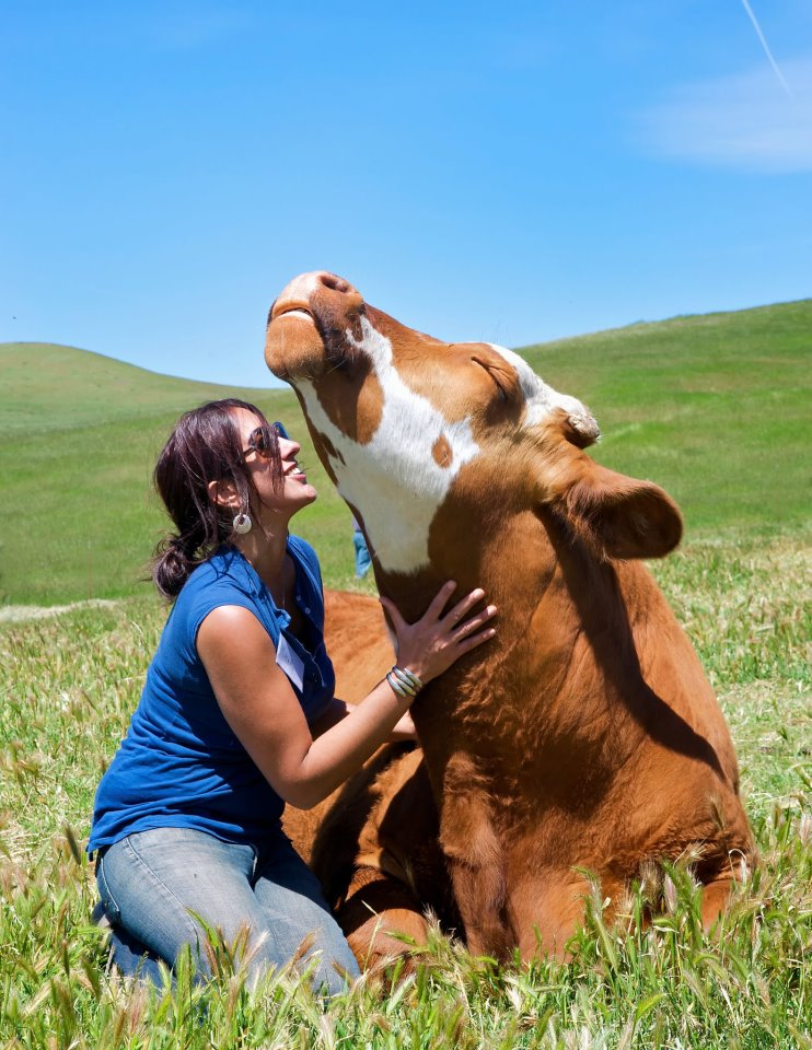 cow loves neck scratches