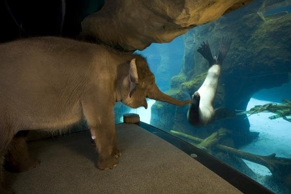 elephant seeing other animals at the zoo