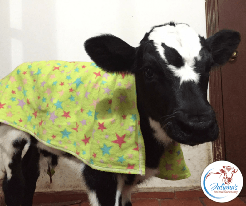 puppy and baby cow story