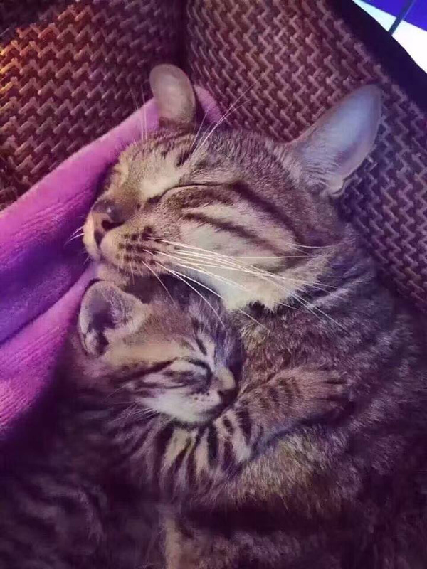 dad daughter cuddling