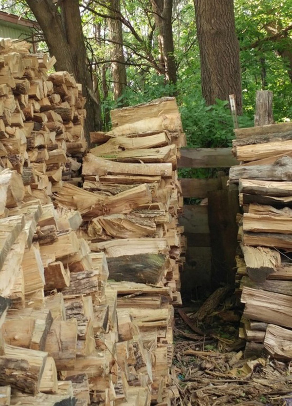 cat in wood pile photo