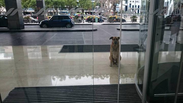stray dog flight attendant story