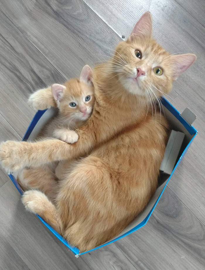 mom and son cat and kitten